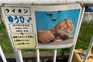 施工実績/釧路市動物園 猛獣舎 床暖工事 使用商品・ゆかゆらら(エグジスタンス)